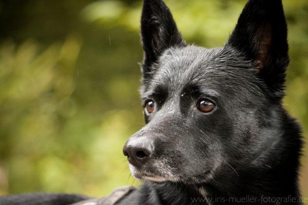 hunde_3