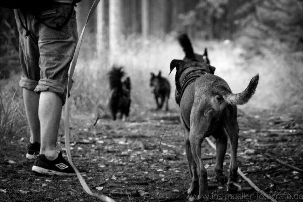 hunde_7