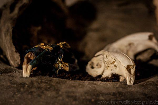 skull2_1